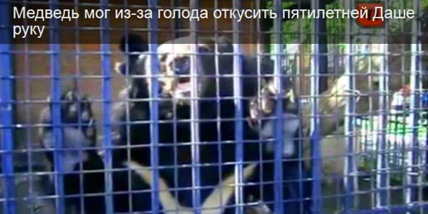 Медведь откусил руку ребёнку