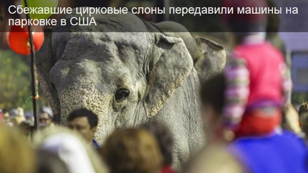 Цирковые слоны передавили машины на парковке