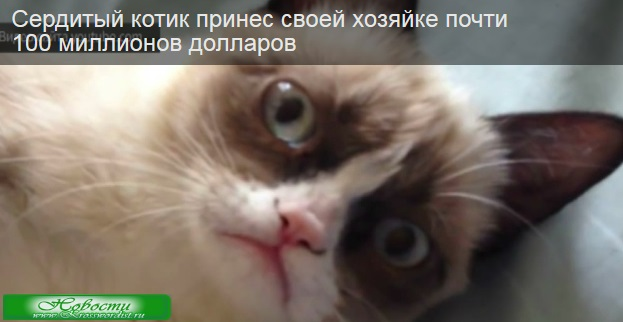 Кот заработал почти 100 миллионов долларов