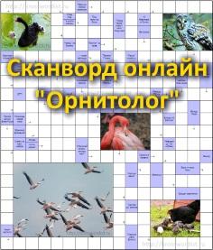 Сканворд онлайн - «Орнитолог»