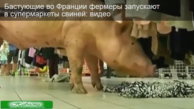 Франция: Свиньи в супермаркете. Видео