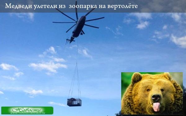 Медведи улетели из  зоопарка на вертолёте